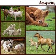 Афлуксид. Антидиарейное средство для животных Киев