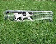 Живоловушка. Котоловка. Котоловушка. Клетка для отлова кошек. Поймать кота и вернуть в семью Киев