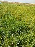Продається земельна ділянка Верховцы, Львовская область, Самборский район Самбор