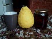 Продаються півтора річні деревця кімнатного великоплідного лимона. Калуш