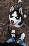 Передержка собак г. Черкассы Черкассы