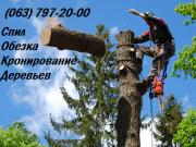 Спил, обрезка, кронирование деревьев Чернигов