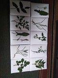 гербарій листя дерев та рослини Жашков