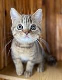 Продамся в хорошие руки))) Ваш будущий котик Киев