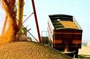 Перевезення зернових по Україні Житомир