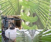 Суспензия Хлореллы для растений, Органическое удобрение для растений Киев