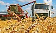 Перевозка зерна и зерновых грузов по Украине Киев