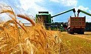 Перевезення зерна і зернових вантажів по Україні Кировоград