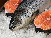 Упаковщик филе лосося (17зл) Ивано-Франковск
