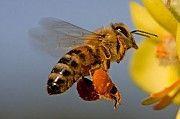 Бджолопакети Хотин