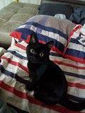 Пропала кошка !!! Житомир