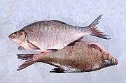 Рыба опт. Свежемороженая, вяленая, рыба х/к Днепр