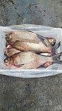 Речная рыба опт. Карась, густера, синец, плотва, лещ и др. Київ