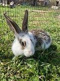 Продам кроликов Николаев