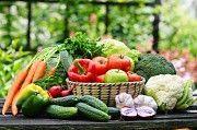 Продаю розсаду урожайних сортів овочів та квітів Обухов