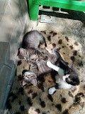 Раздаем пушистых котят Харьков