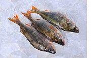 Свежевыловленная рыба оптом. Икряная рыба Никополь