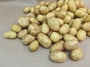 Продам молодой картофель Измаил