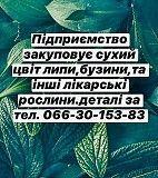 Закуповую лікарські рослини. Полтава