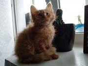 Кошеня в хороші руки Тернополь