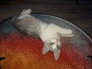 котенок в добрые руки Днепр