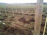 Продаю опоры, колышки Polyarm для растений Тернополь