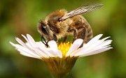 Сон на пчелиных ульях. Апи-Домик Чернигов