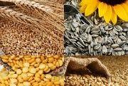 Куплю подсолнечник, пшеницу, ячмень, кукурузу Харьков