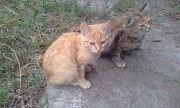 Віддам котятко Светловодск