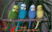 Продам волнстых попугаев Николаев