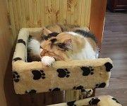 Віддам кішку Кременчуг