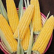 Кукурудза продати. Кукурудза куплю Полтава