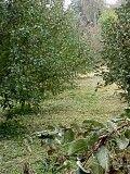 Продам земельный участок в Соснице. Черниговская обл. Чернигов