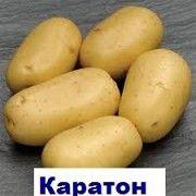 Продам посадкову картошку ранніх,середніх та піздніх сортів. Бровары