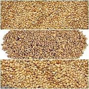 Зернові куплю дорого Сумы