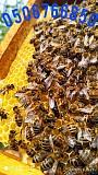Пчелиные матки. Бджоломатки. Мукачево