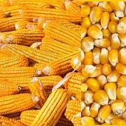 Закупаем зерновые Николаев