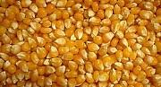 Закупаем зерновые дорого Чернигов