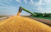 Куплю зерновые дорого Чернигов