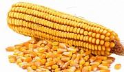 Предлагаем продать зерновые Чернигов