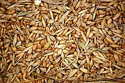 Куплю зерновідходи зернові, бобові, олійні Чернигов