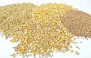 Зерновідходи зернові, олійні, бобові куплю Чернигов