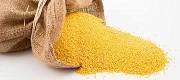 Продадим семена ПРОСО, белое, черное, желтое Вольногорск