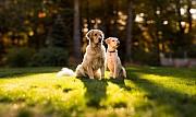 Педержка для собак в частном доме Киев