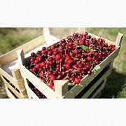Продам вишню нового урожая Черкассы