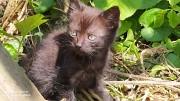 Віддам котенят 3 котики по 1,5 місяці. Винница
