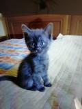 Дарим котят Киев