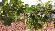 Колышки для растений, опоры для растений из композитных материалов POLYARM. Цены от производителя Тернополь