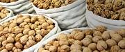 Продаем грецкий орех оптом любой фракции по Украине и на экспорт Александровка